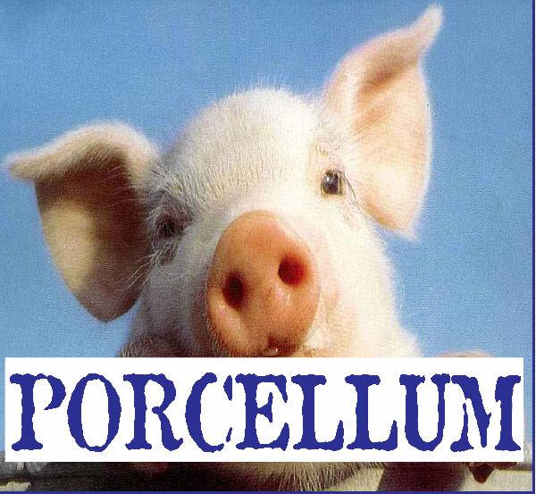 Per il PD e il PDL il Porcellum non si tocca